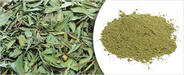 Megha Products Products Henna Leaves Henna Powder Senna